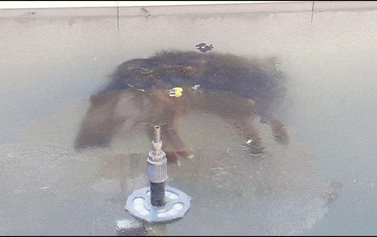 De tanto frio, perro muere congelado en una fuente