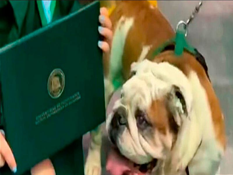 Diploma de su dueña recién graduada