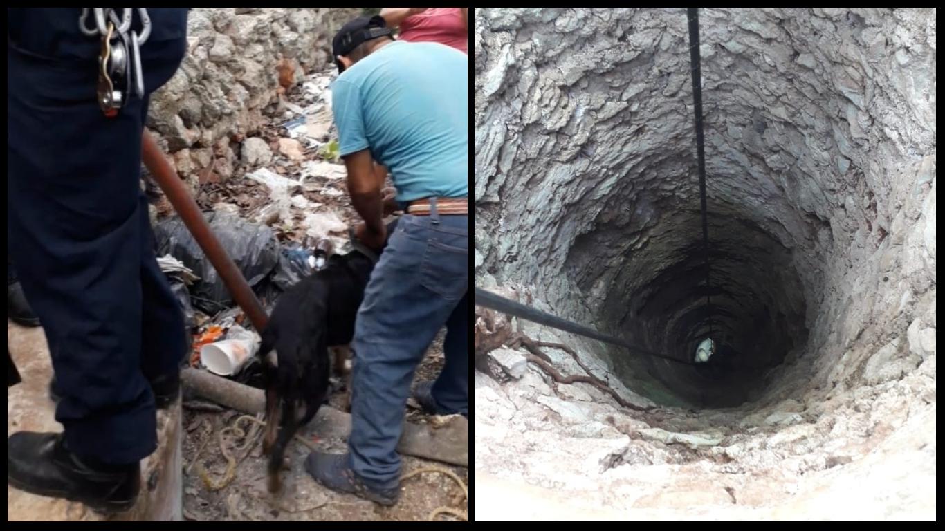 Rescatan a perro que pasó tres días en un pozo