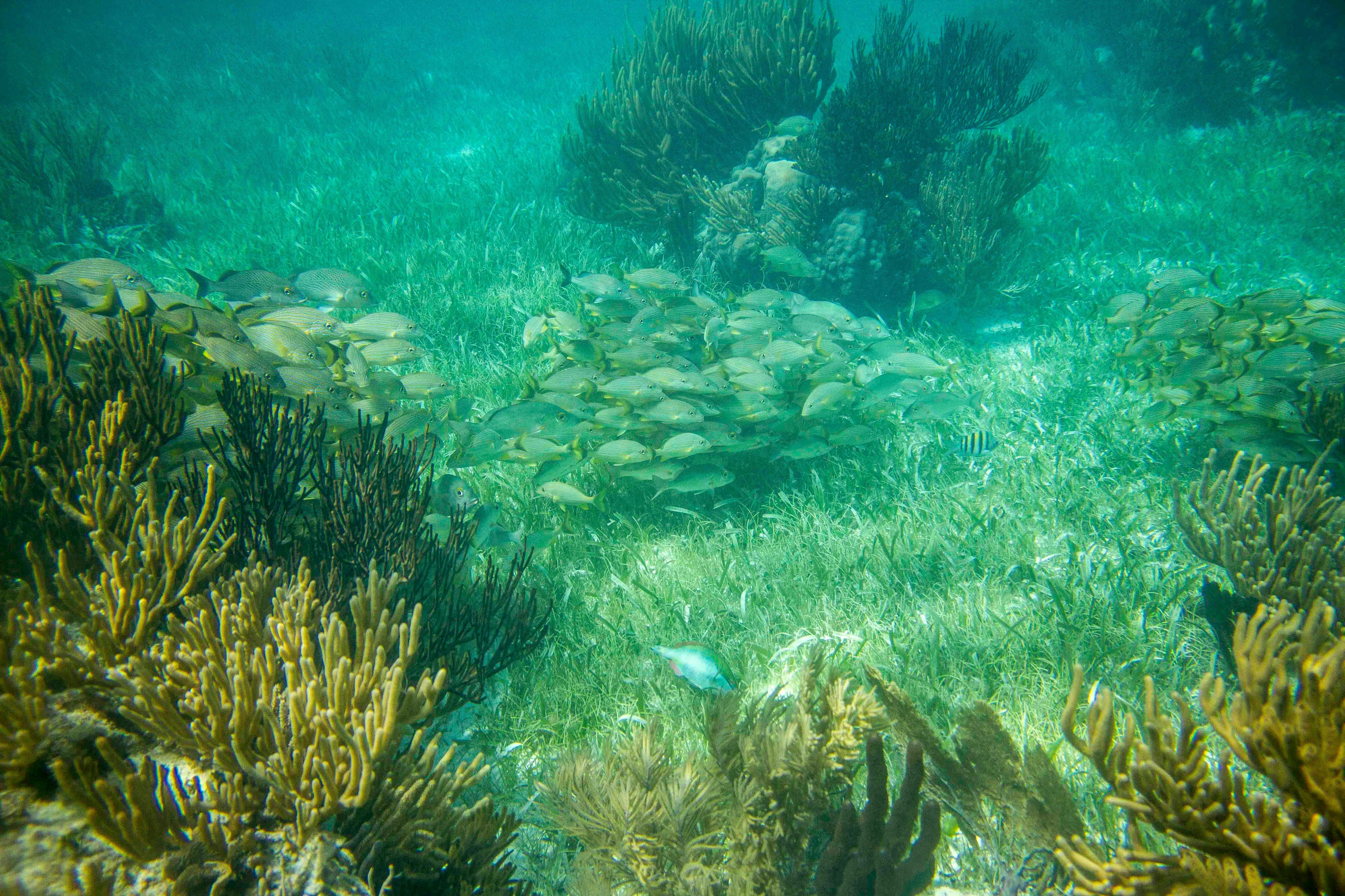 En Puerto Morelos se encuentra la principal barrera arrecifal del continente