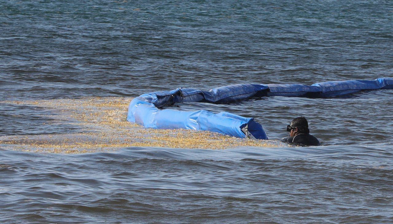 Puerto Morelos refuerza las acciones para combatir el arribo de sargazo