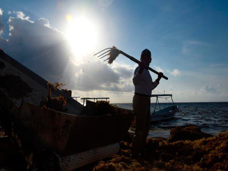Uno de los objetivos de las acciones para enfrentar el fenómeno del sargazo es para que el alga que se recolecte en las playas sea el menor posible