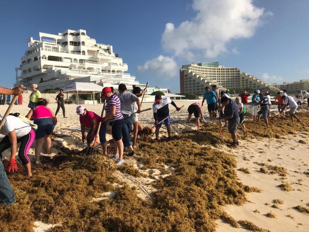 Recolectaron 89 toneladas de sargazo en Cancún, Playa del Carmen, Tulum y Xcalak.