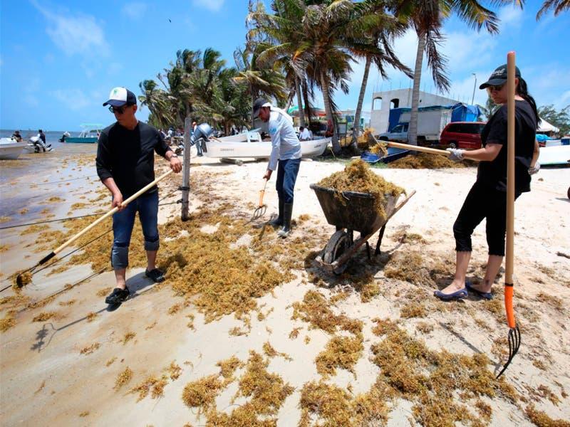 Publica el Gobierno de Quintana Roo una declaratoria para poner en operación protocolos de combate al sargazo