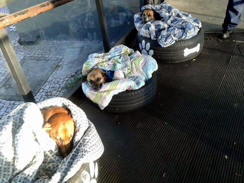 Trabajadores de una estación de autobuses crea camas para perritos