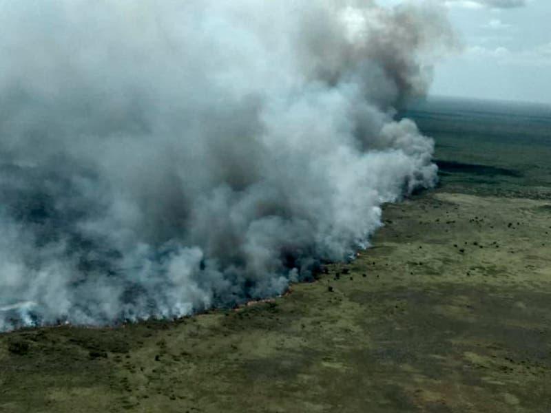 Siete brigadas trabajan para apagar incendio en Sian Ka'an