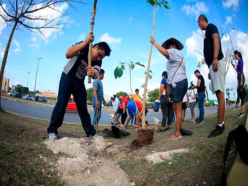 Instituto de la Juventud planta 130 árboles en Playa del Carmen