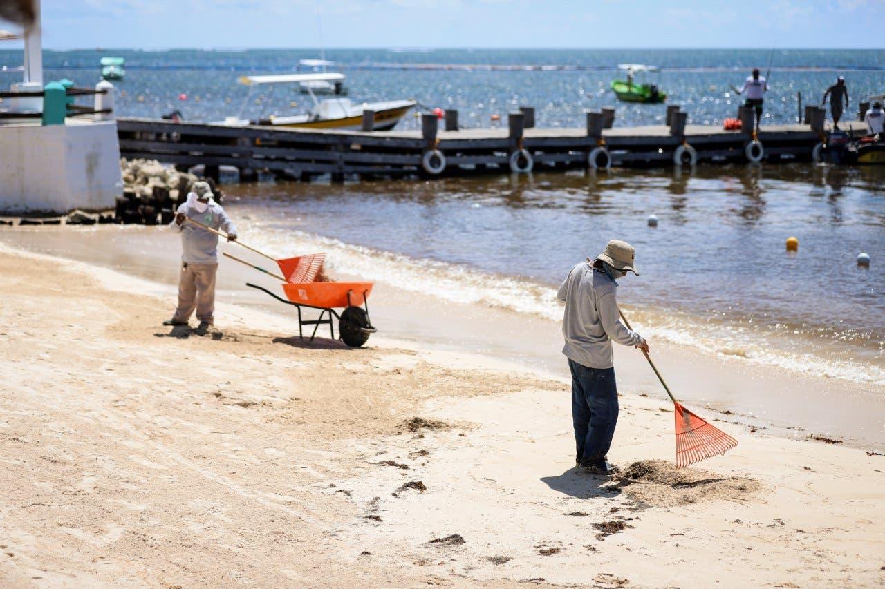 Limpieza de las playas en Puerto Morelos