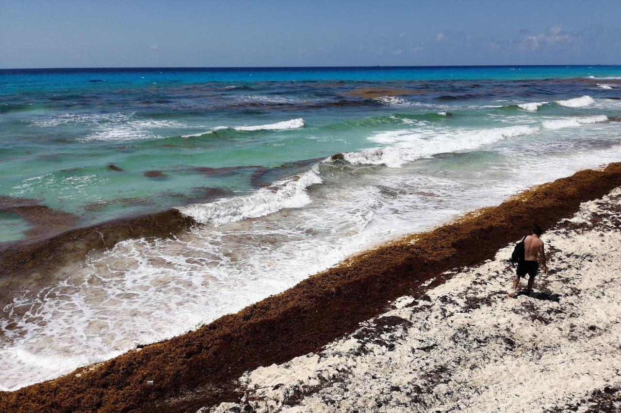Detectan importantes cantidades de sargazo a menos de 20 kilómetros de Cancún