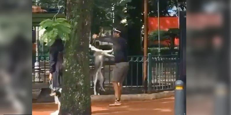 Entrenador que ahorcó a perrito Husky en el parque es detenido