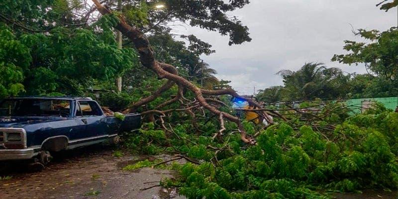 Fuertes lluvias derriban un árbol en Puerto Morelos