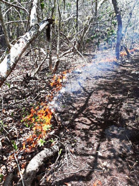 """El fuego en el """"Uaimil"""" se propaga porque en la zona hay un ecosistema arbustivo afectado por la sequía que genera más combustión."""
