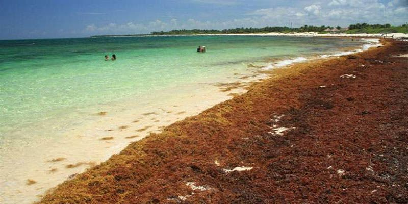 Analizan con boyas comportamiento del sargazo en Quintana Roo.