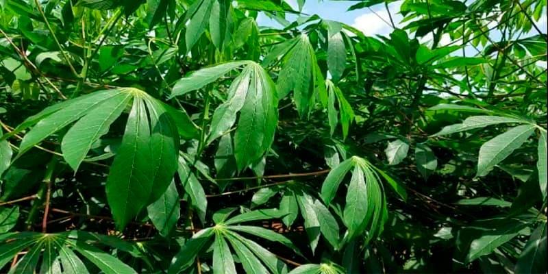 Productos agrícolas no convencionales, una buena alternativa