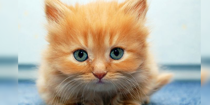 Día internacional del Gato: Lo que tienes que saber sobre esta celebración