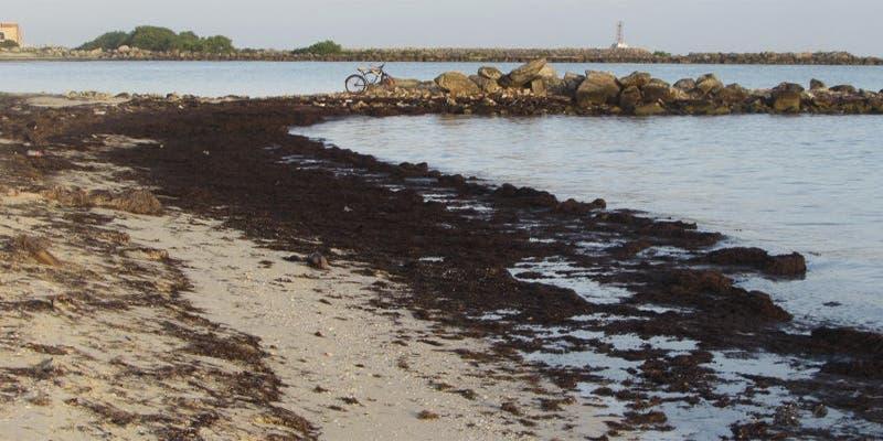Playa de Progreso empieza a sufrir afectaciones por el sargazo