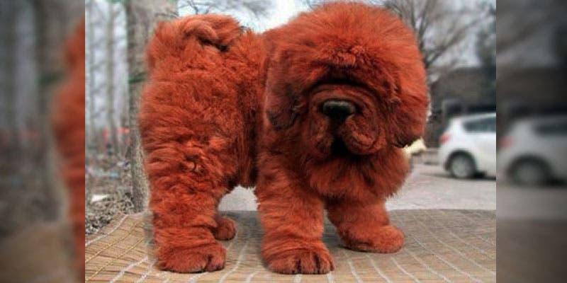 Consejero de Peña Nieto compra el perro más caro del mundo