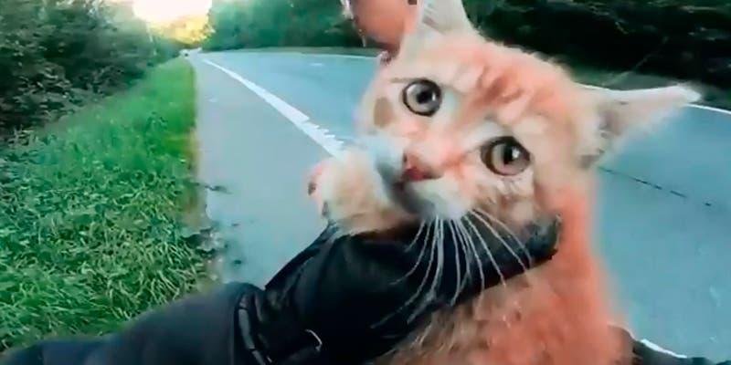 Video: Detienen todo para rescatar a un gatito en la carretera