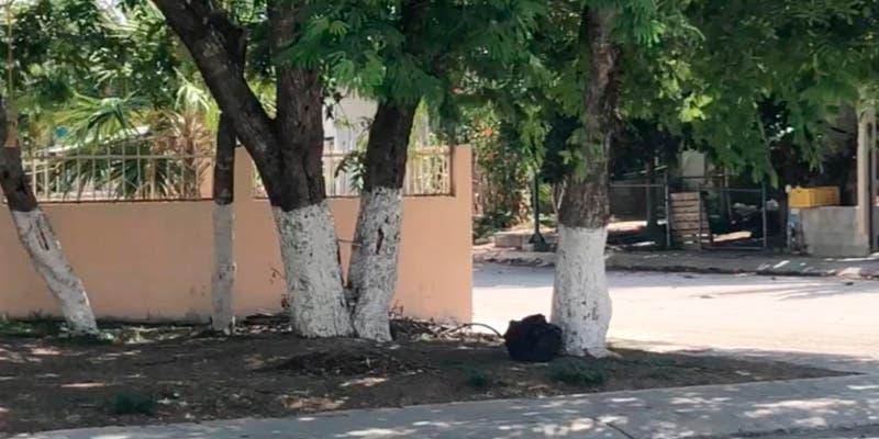 Ley de Arbolado Urbano de Quintana Roo a nada de aplicarse