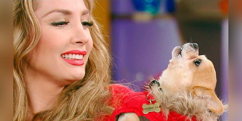 Paty Navidad denuncia maltrato hacia su perrito en aeropuerto