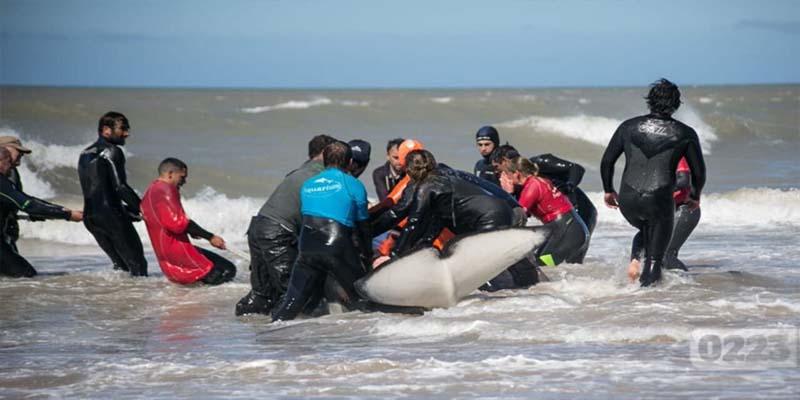 Especialistas de empresa mexicana atienden varamiento masivo de orcas en Argentina