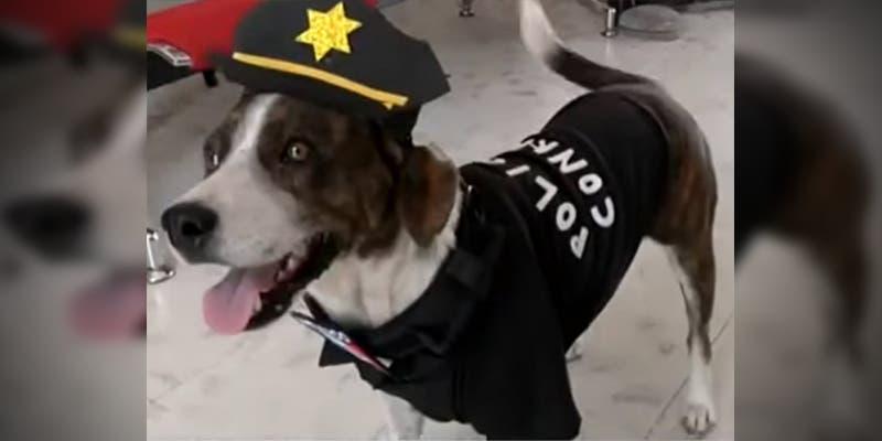 Él es 'Chilaquil': el perro policía que vigila las calles de Yucatán