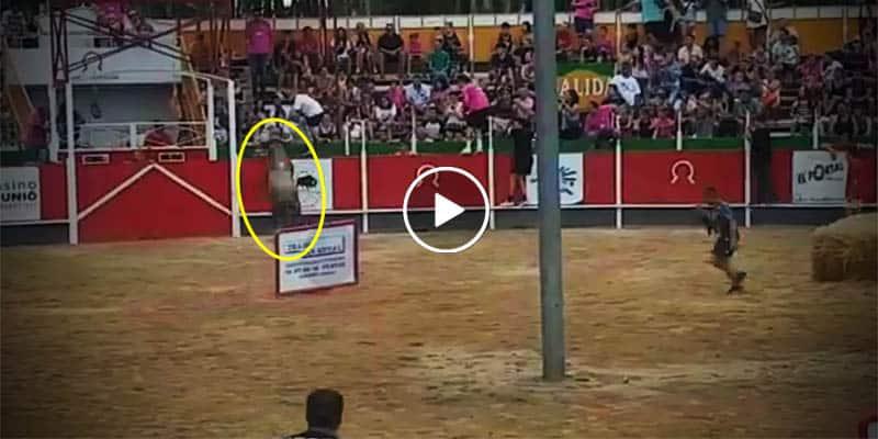 VÍDEO: Toro descontrolado brinca a las gradas y deja más de 15 heridos