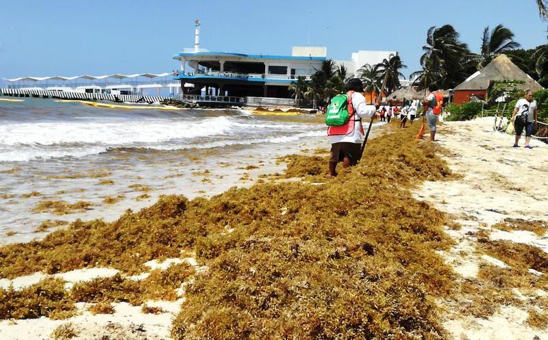 Desdeña alcaldesa de Playa del Carmen comité contra sargazo.