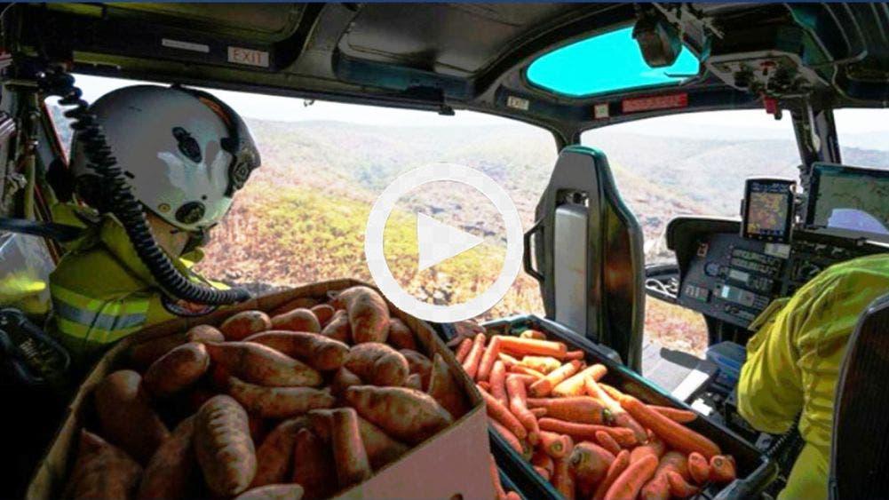 Video: Misiles de zanahorias a animales en Australia