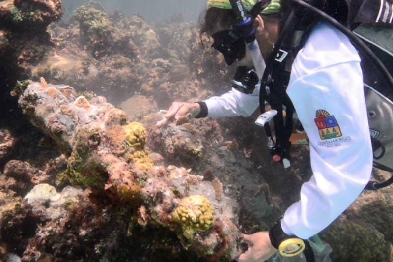 Quintana Roo, rumbo a una catástrofe por la pérdida de corales.