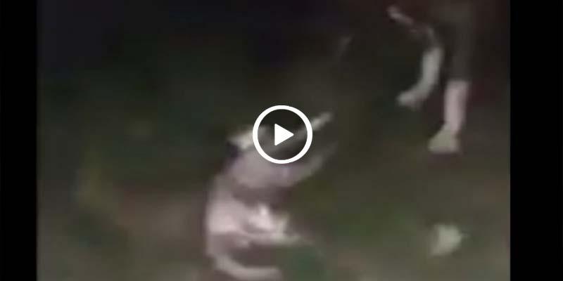 Video: Golpean a gatos y dejan que se los coman los perros