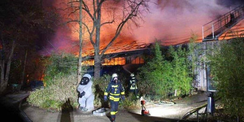Mueren 30 simios en incendio provocado en zoológico de Alemania.
