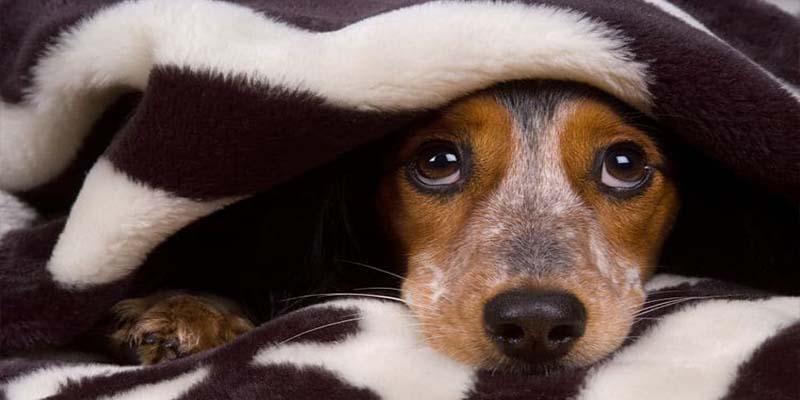 Video: Perro se venga de su dueño por usar pirotecnia