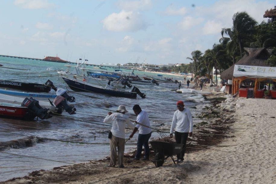 Se rompe tregua con el sargazo; reaparece en Playa del Carmen. se debe a la presencia de los vientos del sureste.