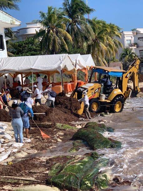 Desdeña alcaldesa de Playa del Carmen comité contra sargazo; preocupación de empresarios y turisteros por la negligencia de Laura Beristain.