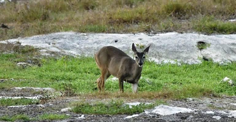 Preocupan especies invasoras en la isla de Cozumel.