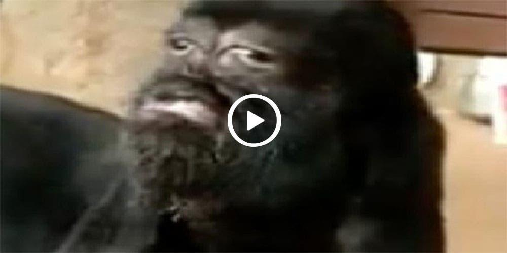 Nace cabra con 'rostro humano' (video)
