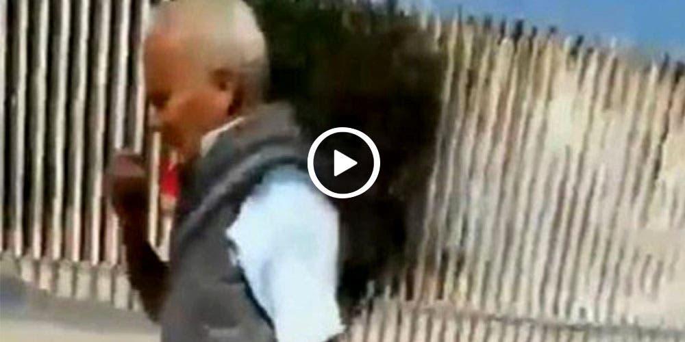 Denuncian en redes a señor por permitir que su perro mate a un gato (video)