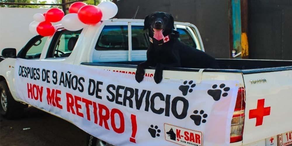 Perrito de la Cruz Roja se jubila tras nueve años de servicio