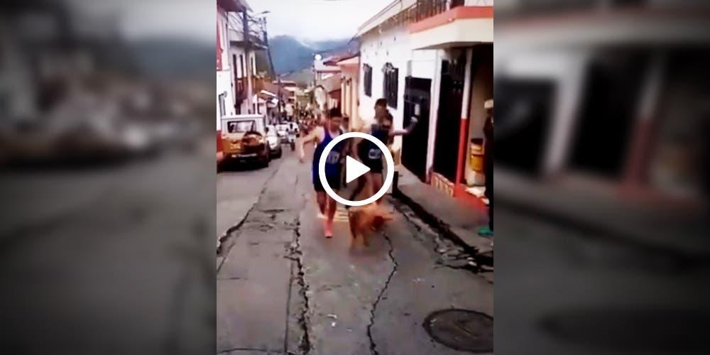 Corredor patea un perro durante la carrera y pierde a su patrocinador (video)