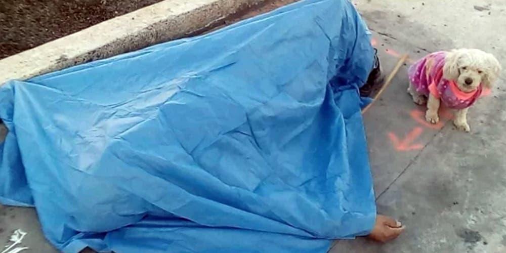 Hachiko mexicano: perro acompaña a su dueño hasta el día de su muerte
