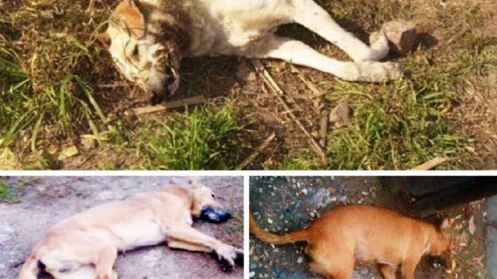 Darán 18 mil pesos a quien diga quién mató a varios perros