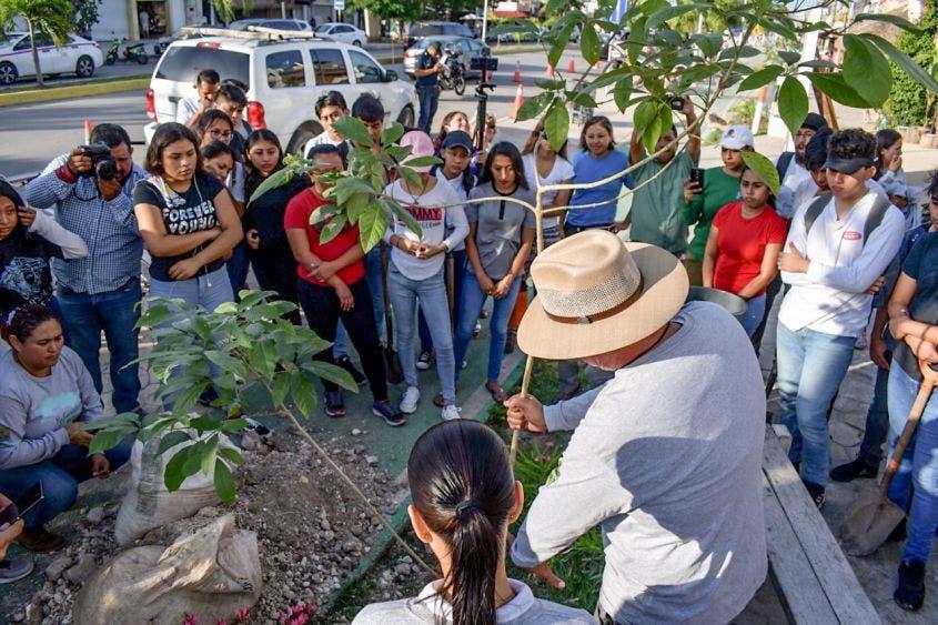 Siembran 40 árboles endémicos en los costados de la Avenida Tulum
