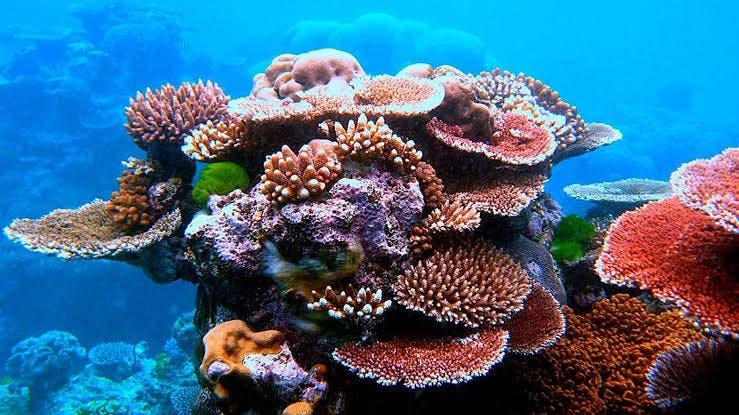 Empeora la salud de los arrecifes en México; en Cozumel es al región con la mejor calificación, de acuerdo con reporte dado a conocer.