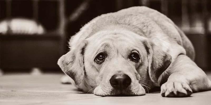 Matan a mascotas en China tras falsa noticia del coronavirus