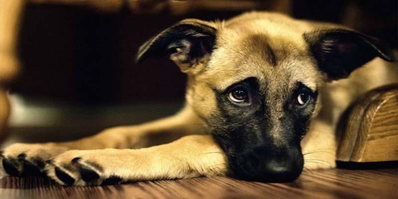 """PETA: Decirle """"mascota"""" a tu perro es ofensivo"""