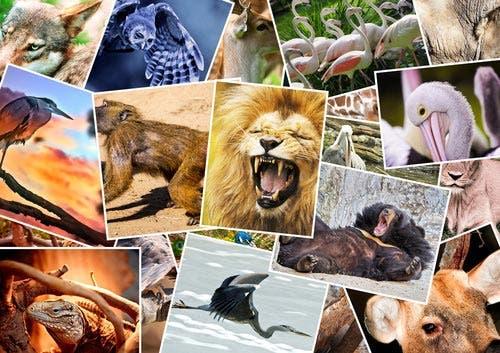 Qué animal eres según tu signo del zodiaco