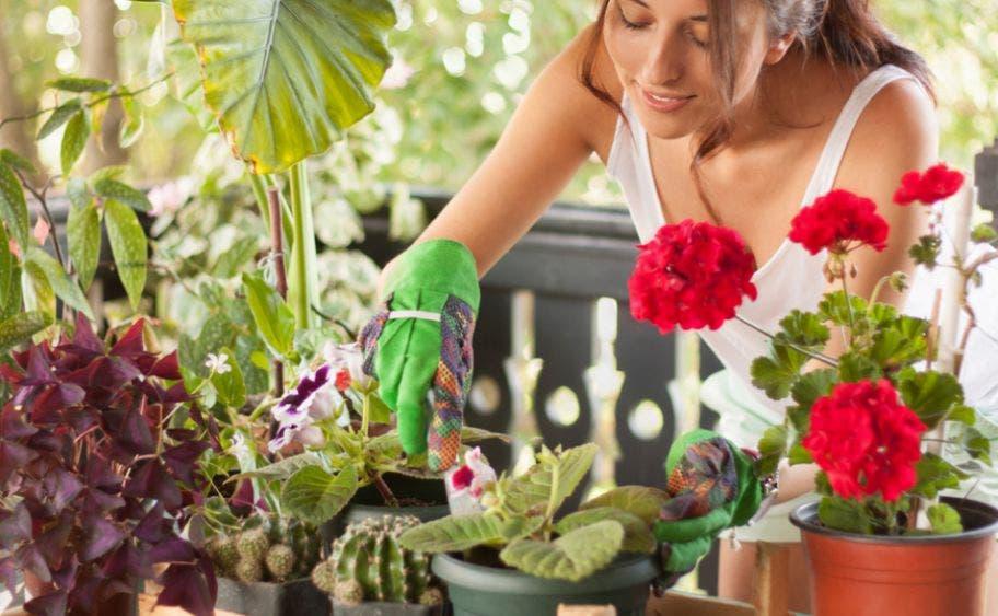 Consejos para cuidar de tus plantas en la cuarentena