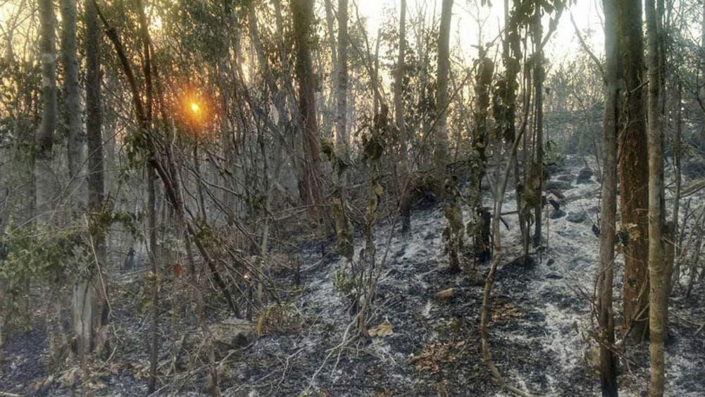Logran controlar incendio forestal en Tihosuco