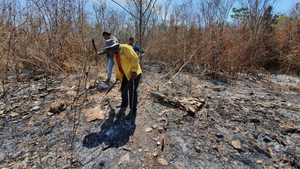 Luego de arduo trabajo liquidan incendio forestal en Leona Vicario